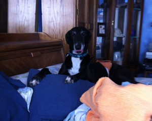 mischievous greyhound