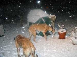snow in austin, 2004 snowstorm, greyhounds in snow