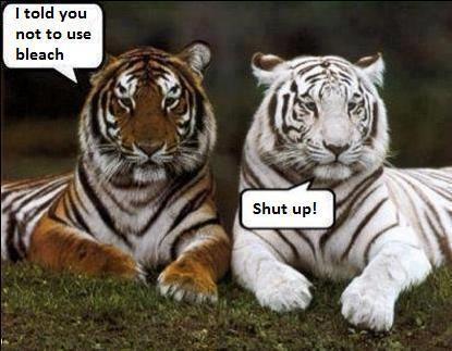 cartoon, funny, tigers, sarcastic