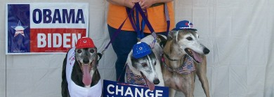 C'mon, We're old enough to vote in dog-years!