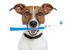 dog with electric toothbrush in his mouth
