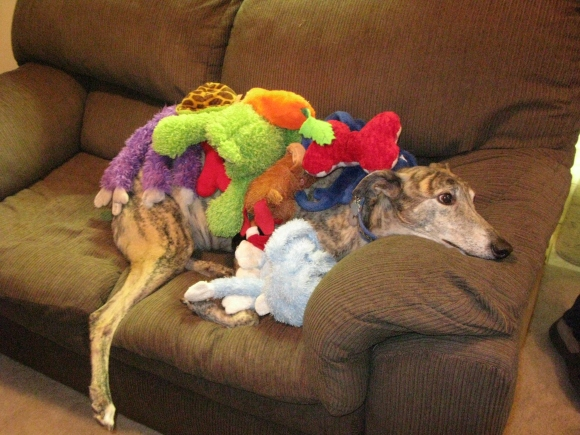 a greyhound birthday party