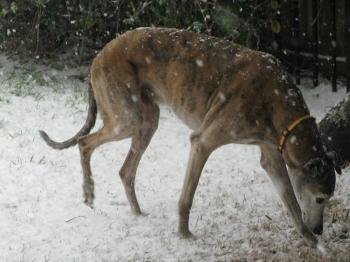 A rare snow in Austin