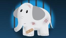 PETA bandaged circus elephant infographic