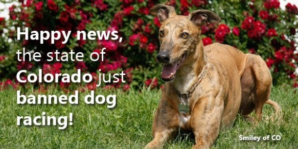 Grey2K announces Colorado as the latest state to ban dog racing