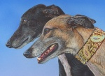 art print reproduction - greyhound