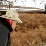 Mother Nature Network's news story: Tumbleweeds menace the west
