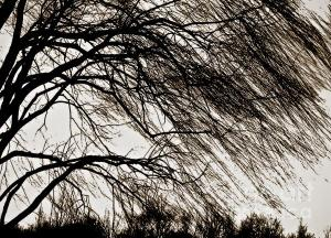 Fine Art America photograph by Carol F. Austin
