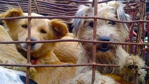 Chinese Dog trade - dogs in cages