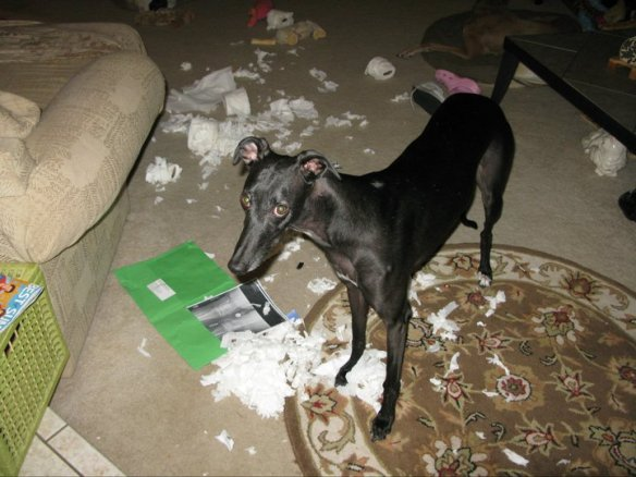 greyhound toilet paper's the living room