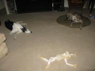 Maisy, Dodgy & the monkey