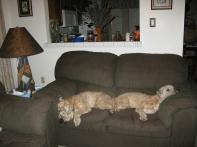 Willie & Ollie Bearden