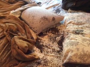 Luca & My Buckwheat Neck Pillow 3
