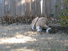 Finney next to the hole he dug!