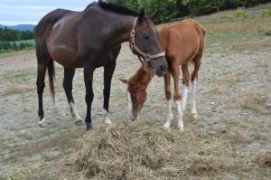 Animal-Neglect-horses