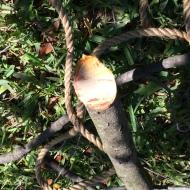 A Tree Bleeds (1)