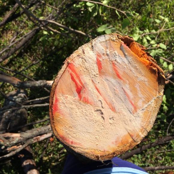 A Tree Bleeds (4)
