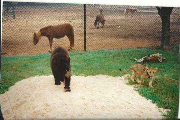 Noah's Ark Animal Sanctuary