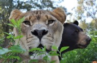 Leo closeup with Baloo in background