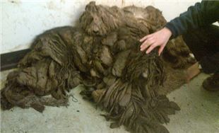 Dogs could be mistaken for a pile of mops