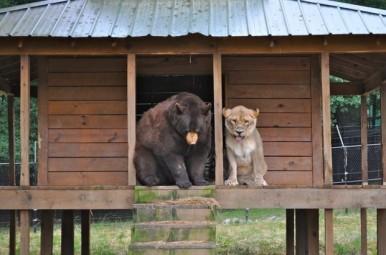 source FB Noah's Ark Animal Sanctuary