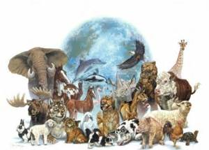 a world of animals