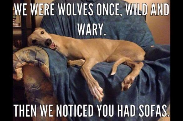 we were wolves once then we noticed you had sofas