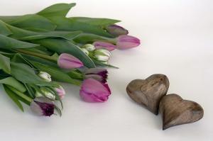 tulips-1344953_1280